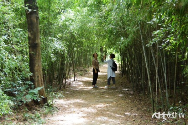 대나무숲.jpg