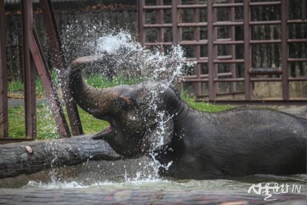 코끼리 01.jpg
