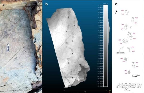 노바페스 울산엔시스(Novapes ulsanensis) 발자국 화석.jpg
