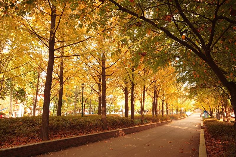 서울의 3所 3色 가을 산책길