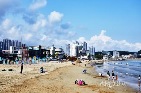 아름다운 해변을 배경으로 펼쳐진 '조화와 공존'의 아상블라주 예술작품